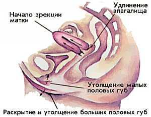 Двойной оргазм у женщин фото 649-124