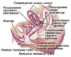 vozbuzhdenie-zhenskogo-vlagalisha