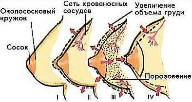 vozbuzhdaet-grud-posle-orgazma-menyaetsya