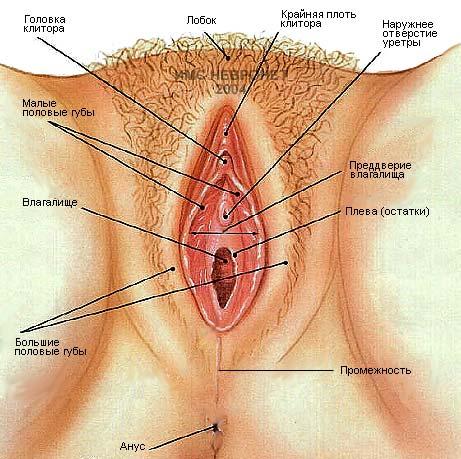 Самые большие половые органы