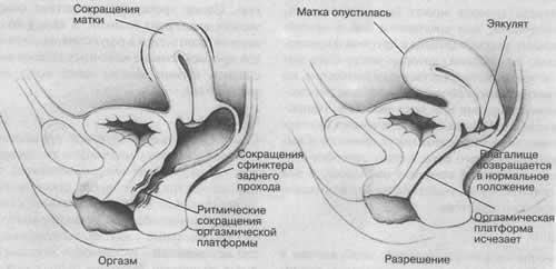 chto-proishodit-s-chelovekom-vo-vremya-seksa