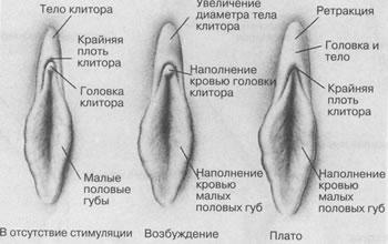 kak-sdelat-chuvstvitelney-klitor