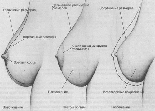 Ощущения во время оргазма у мужчин