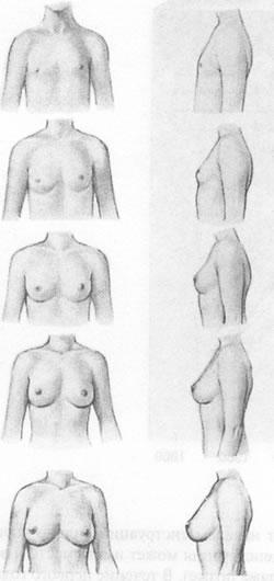 От чего зависит рост груди и как на это можно повлиять
